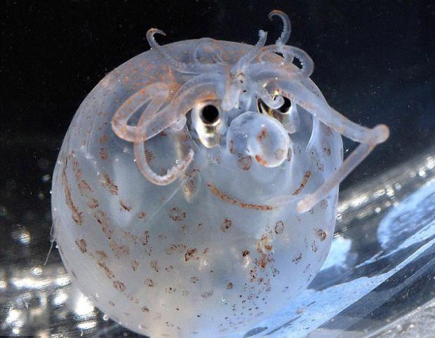 calamaro gigante che sorride